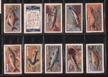 Cigarette cards Fish 1924 set By Phillips Godfrey